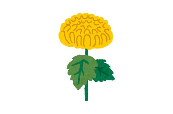 10月 菊の花見